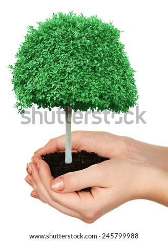 Small tree in hands isolated on white - stock photo