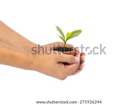Small tree in pot and human hand - stock photo