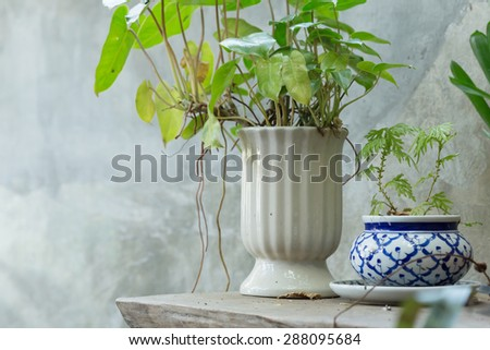 small tree in the ceramic vase decorated on wooden table - stock photo