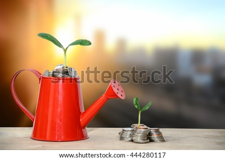 Small tree in the house,watering coins,abstract background concept