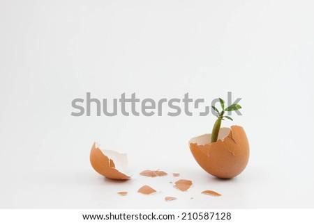 Small tree is fragile, we should cherish - stock photo