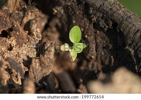 Small tree is the product of dead trees - stock photo