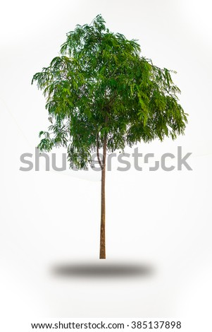 Small tree isolated on white