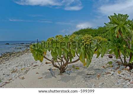 Small tree on a tropical beach in the Philippines