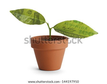 Small tree start with two money leaves in orange pot isolated on white background. - stock photo