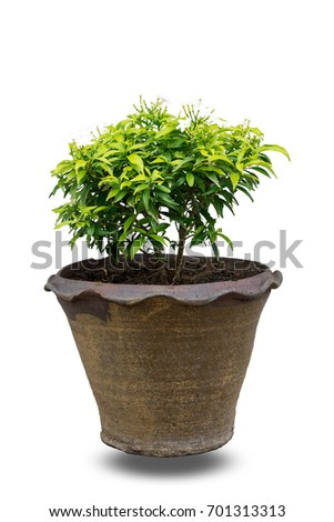 Small trees flowers flowerpot decoration isolated stock illustration small trees and flowers in flowerpot for decoration isolated on white background with clipping path mightylinksfo