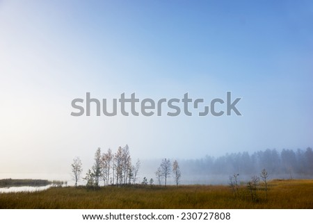 Small trees by river on sunny foggy autumn morning - stock photo