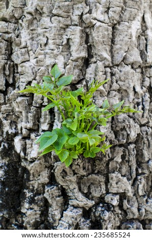 small trees growing on the timber - stock photo
