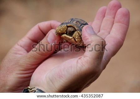 Small turtle on a hand of a tourist guide.