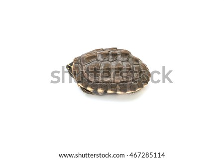 Small turtles on white paper background.