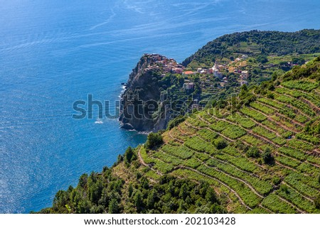 Small village on the cliff and terraced vineyards on downhill with view on Mediterranean sea in Italy. - stock photo