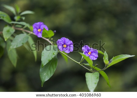Small violet flowers - stock photo
