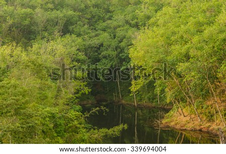 small water River deep in forest natural