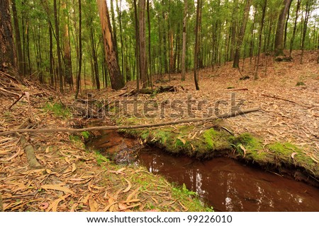 Small water stream through trees and foliage