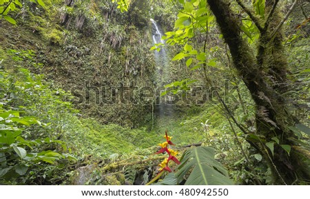 Small waterfall in humid cloud forest. A Heliconia plant flowering in foreground. On western slopes of the Andes near Mindo, Ecuador