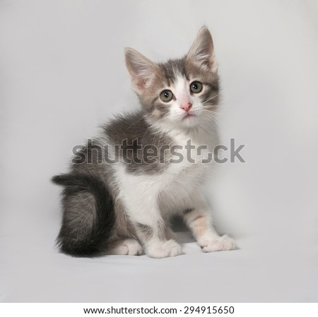 Small white and tabby kitten sitting on gray background