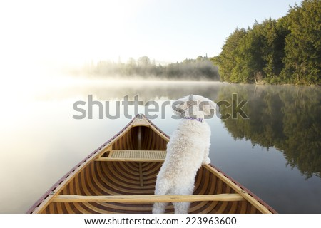 Small White Cockapoo Dog Navigating From the Bow of a Canoe on a Misty Lake - Ontario, Canada - stock photo