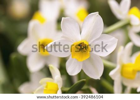 small white flower - stock photo