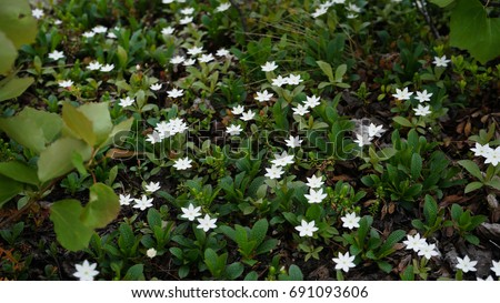 Small white flowers plants tundra swaying stock photo royalty free small white flowers and plants in the tundra swaying in the wind cold russian climate mightylinksfo
