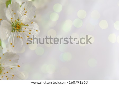 small white flowers with leafs on a pastel background