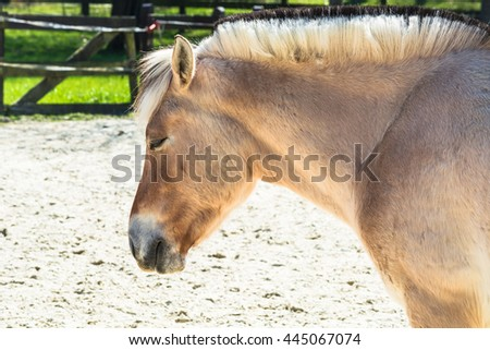 Small white horse, pony a paddock. - stock photo