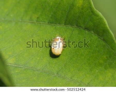small white insect with prickle on the skin crawling on a green leaf