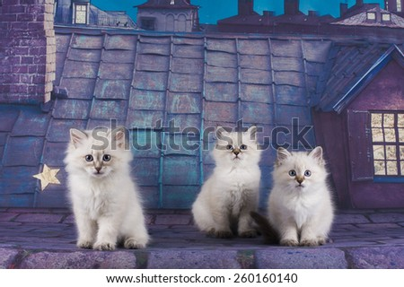 small white Persian kittens on the roof at night - stock photo