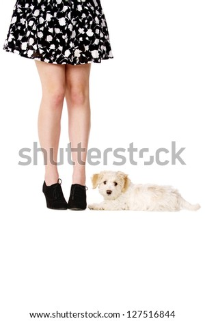 Small white puppy laid next to a woman's legs looking at the camera - stock photo