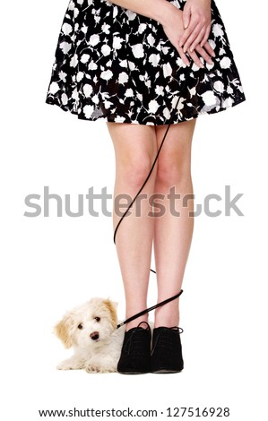 Small white puppy laid with her black lead tangled around a woman's legs isolated on a white background - stock photo