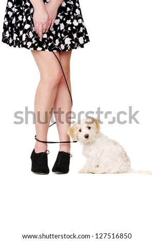 Small white puppy sat next to a woman's legs that are tangled with a lead looking at the camera - stock photo