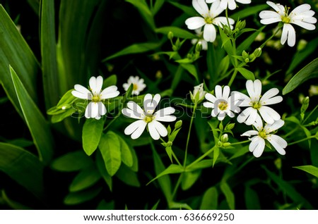 Small white spring flowers stock photo royalty free 636669250 small white spring flowers mightylinksfo