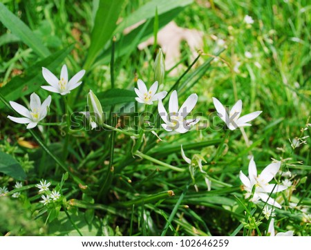 Small white spring flowers grass stock photo edit now 102646259 small white spring flowers in the grass mightylinksfo