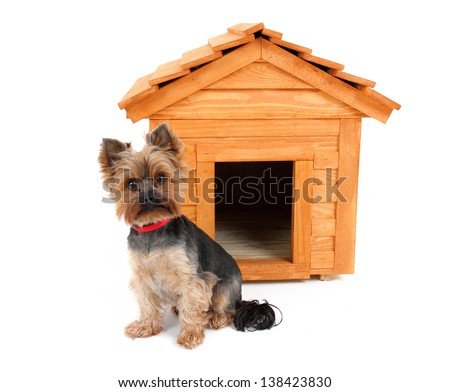 small wooden dog's house and small dog. - stock photo