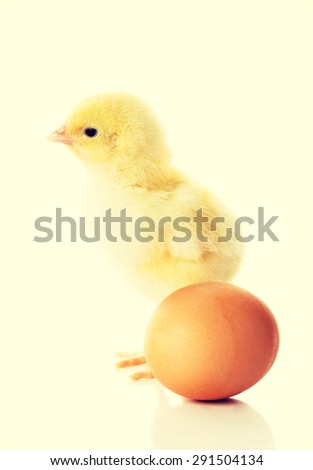 Small yellow chicken and egg. - stock photo