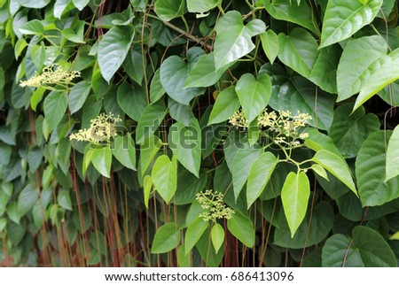 Small yellow flower green leaves red stock photo royalty free small yellow flower and green leaves with red and brown vine the tree is climb mightylinksfo Image collections