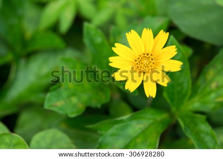 Small yellow flower in park - stock photo