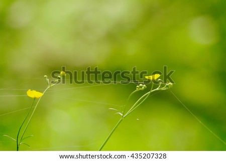 small yellow flowers on a background of green grass - stock photo