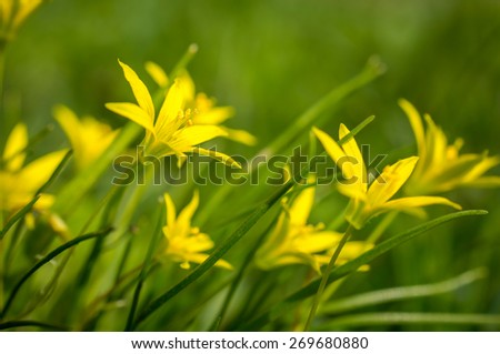 Small yellow flowers on green grass stock photo royalty free small yellow flowers on green grass mightylinksfo