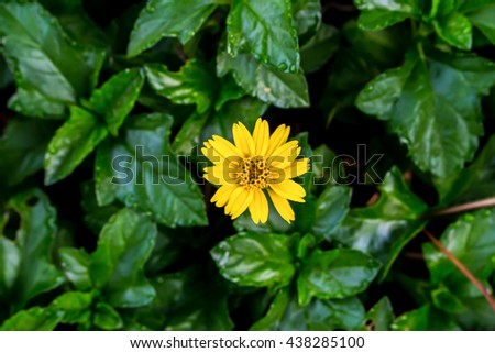Small yellow  in garden,Small yellow flower in nature,Beautiful  background - stock photo