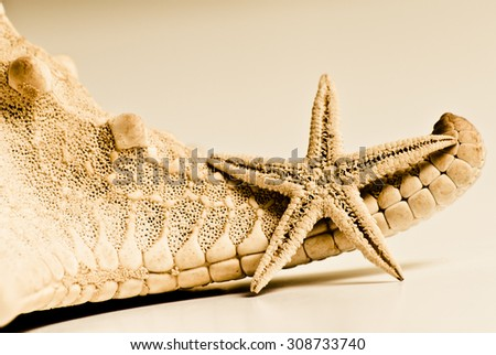 Small yellow starfish lean against a big starfish and enjoy the summer sun during the vacation on white homogenous background - stock photo