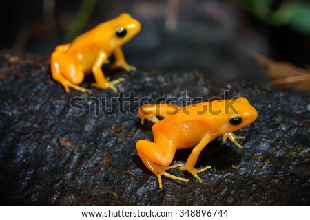 small yellow tropical frog sitting on wood