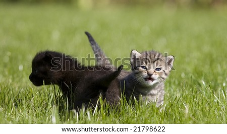 small young cat portrait on green grass