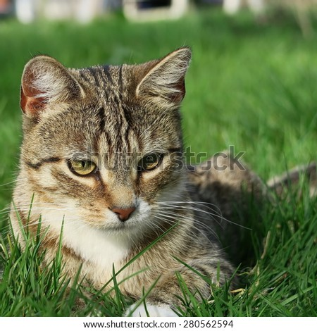 small young domestic cat playing in the grass outside