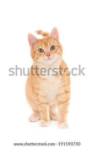 Small young ginger cat, looking at camera, isolated on white