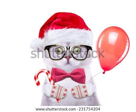 Smart and beautiful cat in a Christmas costume holding a toy. New Year's - stock photo