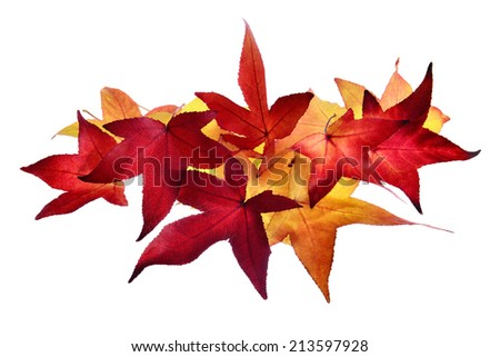 Smart arrangement of red and gold autumn leaves on pure white background - stock photo