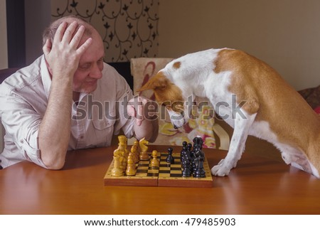Smart basenji dog desperately thinking about next move in a chess family tournament
