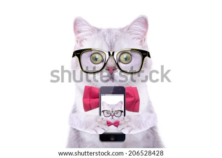 Smart beautiful british cat photographed themselves on the phone. Funny animals. Trendy cat dressed in beautiful clothes - stock photo