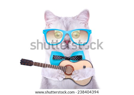 Smart beautiful british cat with a guitar. Funny animals. Trendy cat dressed in beautiful clothes - stock photo