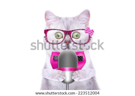 Smart beautiful british cat with a microphone. Funny animals. Trendy cat dressed in beautiful clothes - stock photo